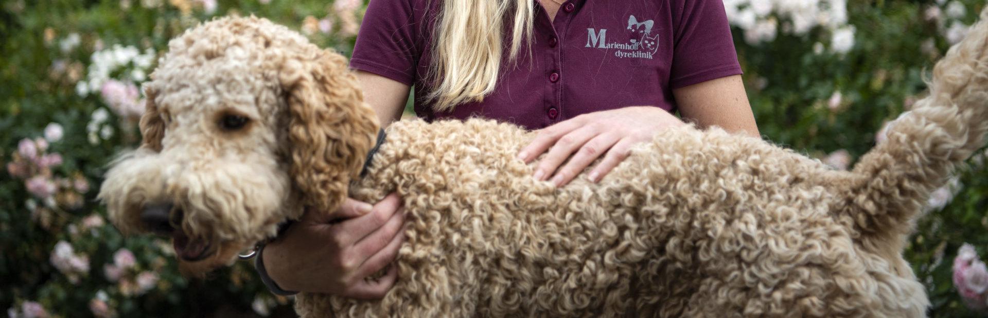 adfaerdssamtale hund kat marienhoff dyreklinik1 e1602759893791