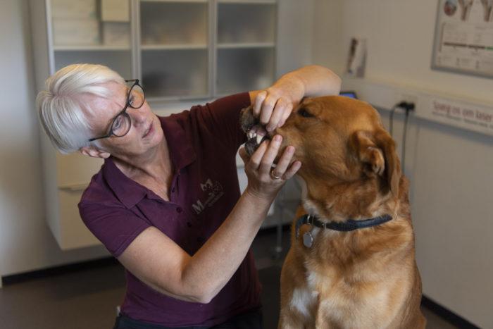 sundhedsundersoegelse af hund marienhoff dyreklinik4