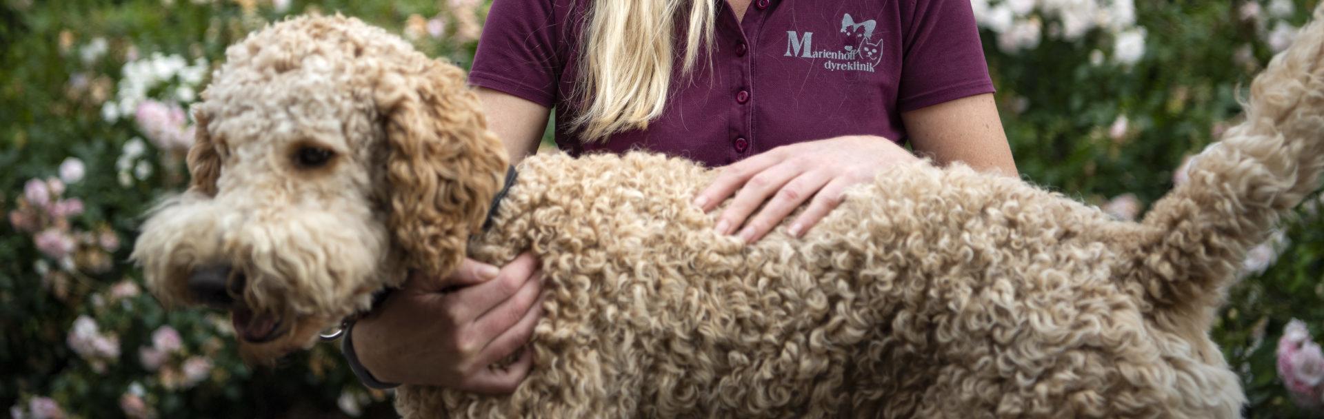 vaccination af hund marienhoff dyreklinik1 e1602752962103